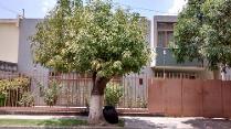 Venta - Casa En Venta Col León Moderno - León Guanajuato